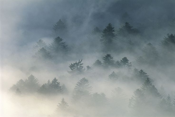 Vosges' Forest shrouded in mistery by Vincent Munier