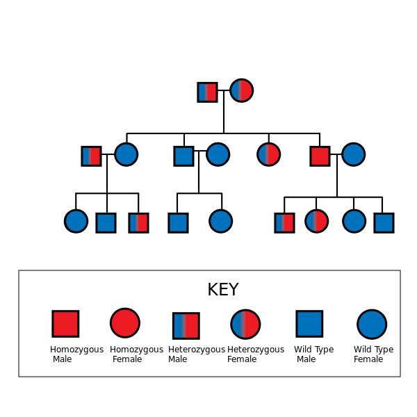 Autosomal Recessive Pedigree Chart   Biological Anthropology ...