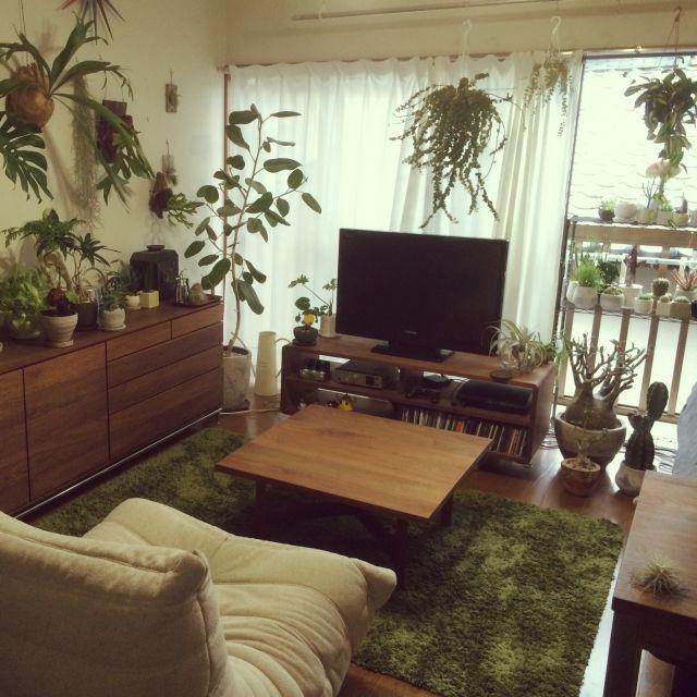 「観葉植物」 「TOGO」に関連する部屋のインテリアの実例