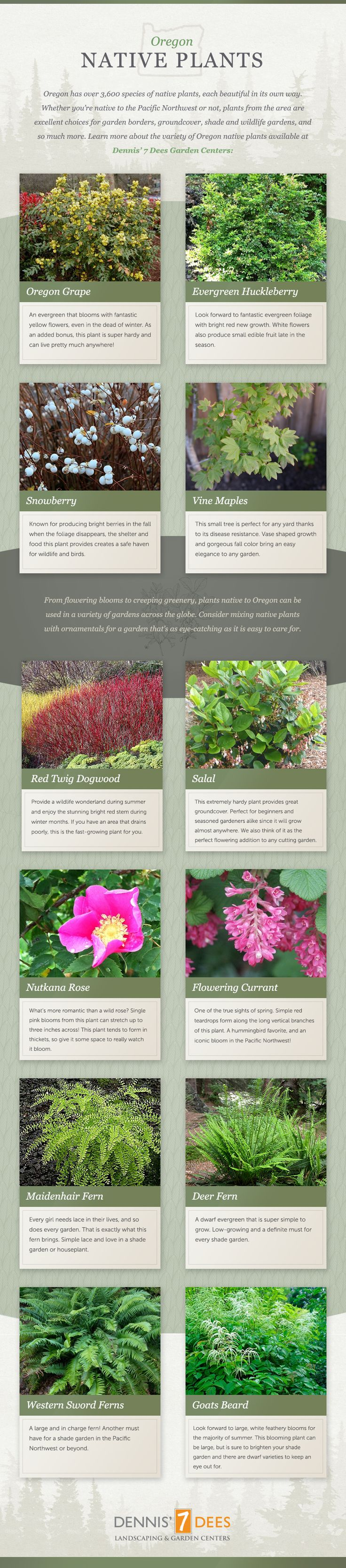 Oregon Native Plants | Portland Nursery | Dennis' 7 Dees | Dennis' 7 Dees