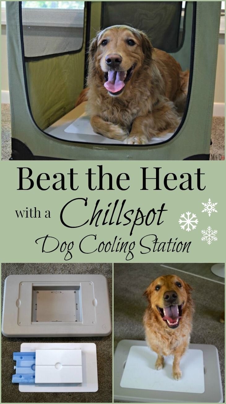 Overheating can be very dangerous for our pets, putting them at risk for heat exhaustion and heat stroke. The Chillspot is a unique dog cooling pad that stays cool for 8+ hours - giving your dog a sanctuary from the heat. Perfect for Summer temps or after exercise!