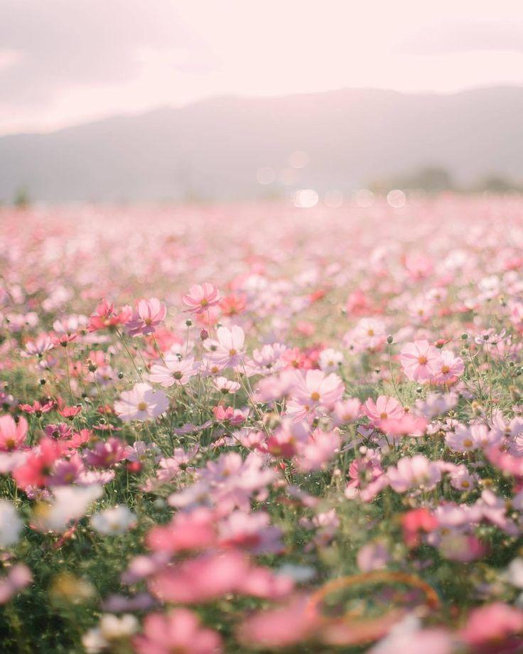 • Fields of Dreams