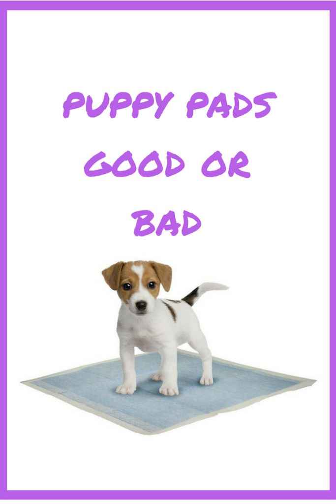 Are puppy pads good or bad for your puppy training needs if you are considering training your puppy yourself.