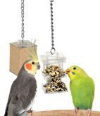 Lost of toxic and nontoxic foods and items for birds.