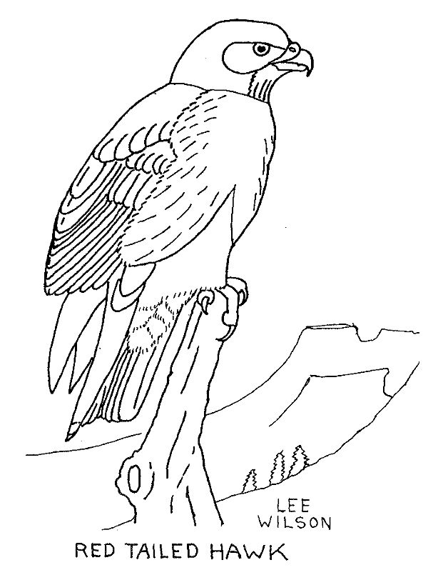 free hawk images Hawk coloring page Animals Town