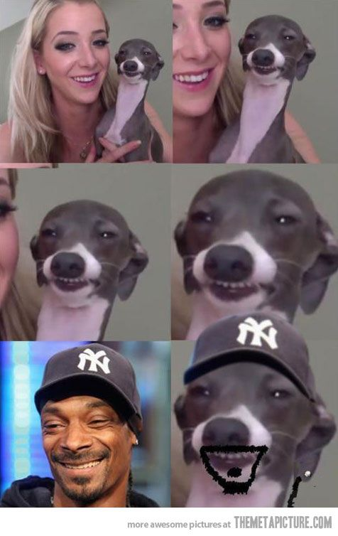 I can't stop cracking up like an idiot at that dogs ridiculous face... He legit looks high!