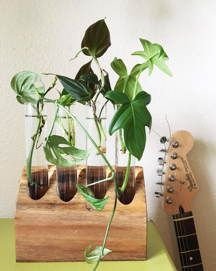 Learn how easy it is to root plant cuttings in water. You can share with your friends or make more plants for yourself!