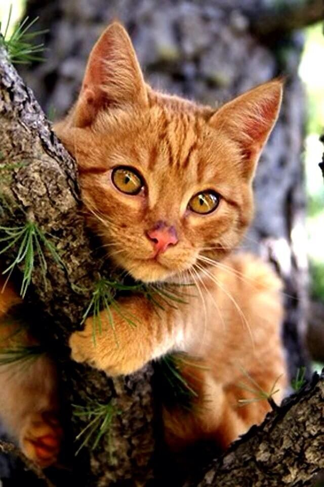 tree-hugging kitten