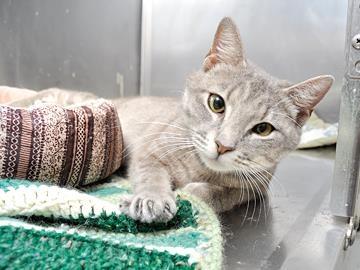Manatee County Cat Rescue