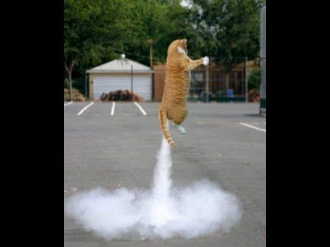 farting cats? FUNNY