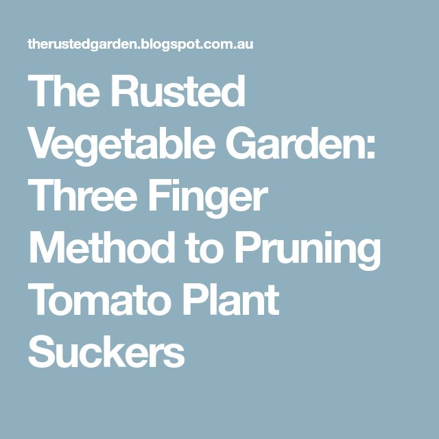 The Rusted Vegetable Garden: Three Finger Method to Pruning Tomato Plant Suckers
