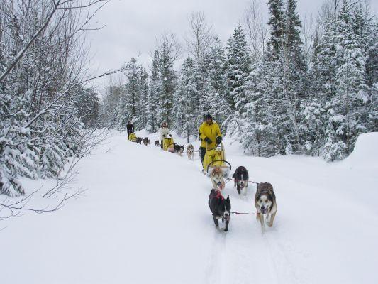 Montagne et arrière-pays en traîneau à chiens