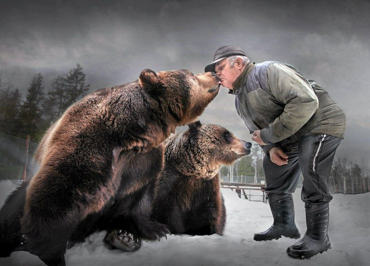 A man and his family, Finland. Kuusamon Suurpetokeskuksessa asuu kuusi kesyä karhua. Osa niistä on orpoja: Tessun ja Vyötin emot on ammuttu. Kun luontoturisti haluaa nähdä karhun, suden, ahman ja ilveksen, tarvitaan melkoisia järjestelyjä ja kepulikonstejakin.