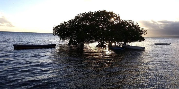 """14 Pacific Island Nations Negotiate World's First Climate Treaty to Ban Fossil Fuels 