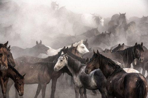 Full gallop by Nimet Gönenç Çınaroğlu