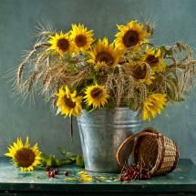 Sunflowers in a milk bucket