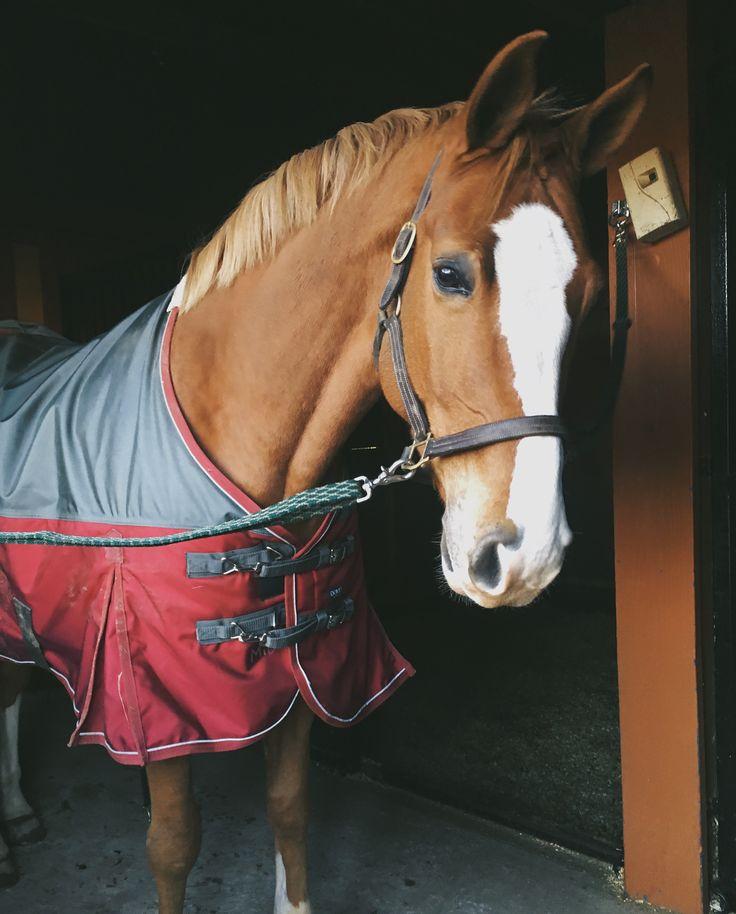 I got a new horse yay! He is so pretty and I am excited to train him