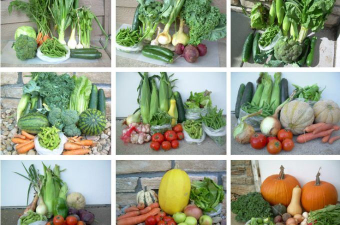 Home-grown veggies can fight climate change—but beware the compost pile