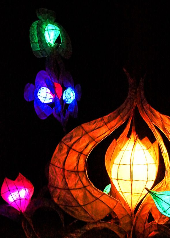 Glow Wild After Dark Wakehurst Place - annual after dark Christmas events for families