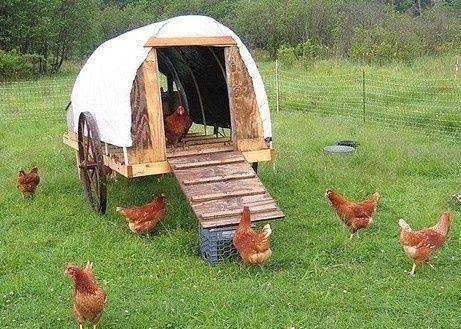 34 best images about poulailler on pinterest a chicken. Black Bedroom Furniture Sets. Home Design Ideas
