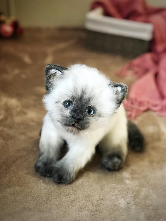 Siamskij Kotyonok Etsy Siamese Cats Pet Replica Realistic Stuffed Cat