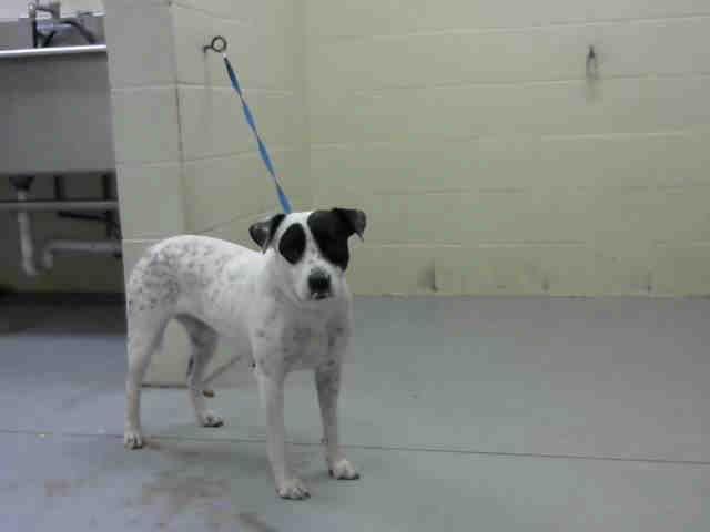 Labrador Retriever dog for Adoption in Conroe, TX. ADN-509113 on PuppyFinder.com Gender: Female. Age: Adult