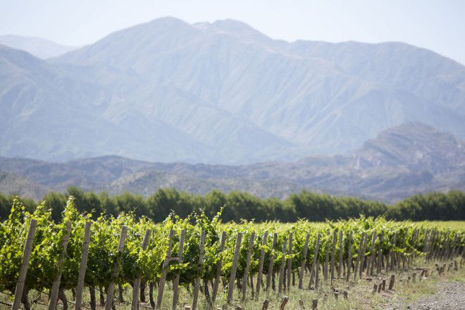 Local's guide to the best wine in Argentina