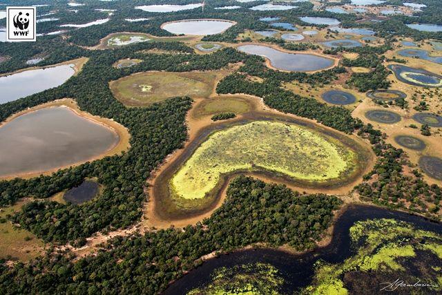Neste dia 12 de novembro, em que é comemorado o Dia do Pantanal, o WWF-Brasil criou infográficos para apresentar um pouco do bioma e mostrar sua importância para o Brasil e o mundo, ressaltando as ameaças e alternativas para proteger a região.