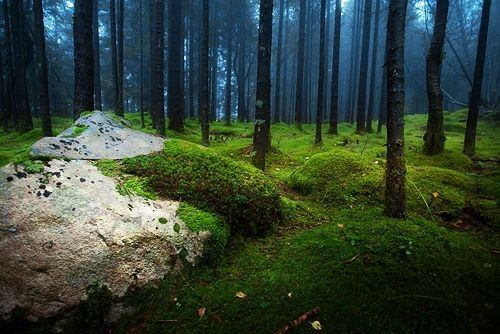 Moss forest Norway