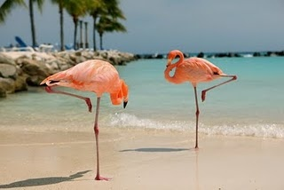 Flamingos in ARUBA!!