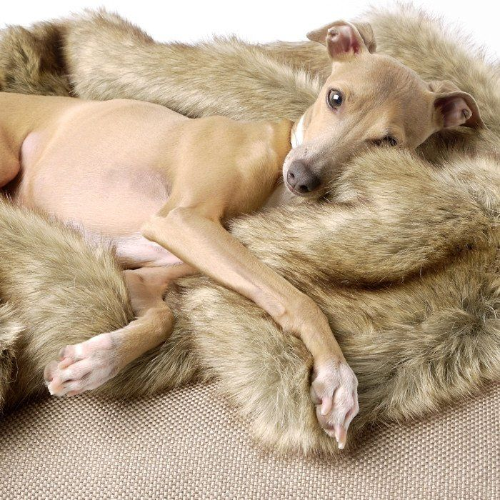 Faux Fur Dog Blanket | Luxury Dog Blankets | Dog Blanket| Charley Chau – STYLETAILS