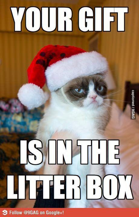 I Haz A Proud Cat Meme