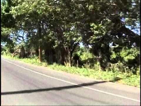 EXCURSION EN BOOGIE PUNTA CANA   Por Solo US$80 Salida Diaria   DOMINICAN TOURS - dominicantours