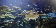 Tengeri akvárium
