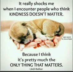 It really shocks me when I encounter people who think kindness doesn't matter. Because I think it's pretty much the only thing that matters. - Josh Radnor #quotes #wordstoliveby #cuteanimals – More at http://www.GlobeTransformer.org