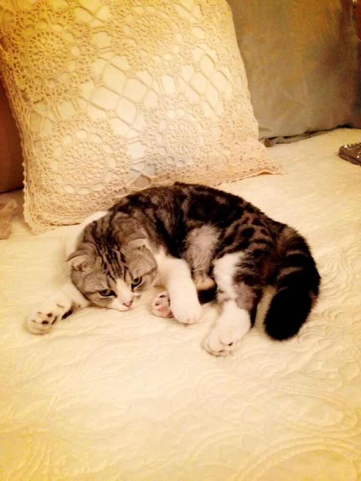 Taylor Swift's cat Meredith