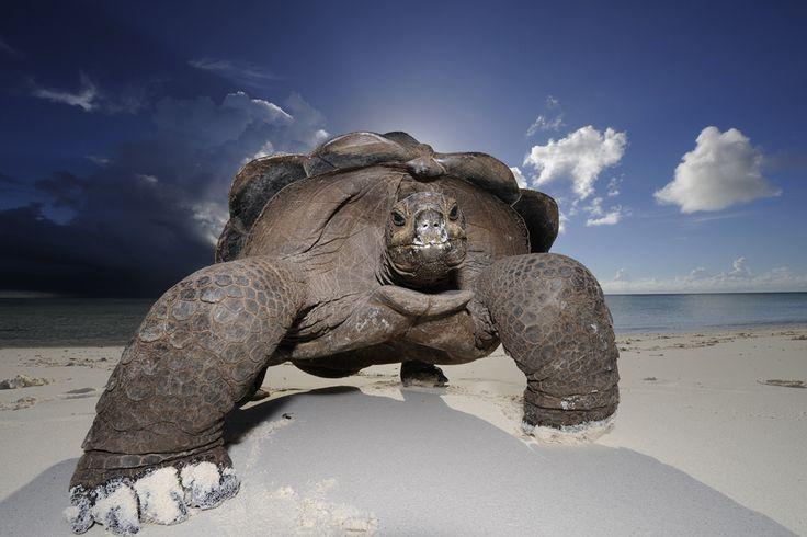 Uma das ilhas mais inacessíveis do planeta. Em um canto remoto do Oceano Índico, se encontram as 115 ilhas que compõem as Seychelles, um lugar que muitos conhecem pelo nome, mas poucos sabem por localização, e ainda menos já visitaram.