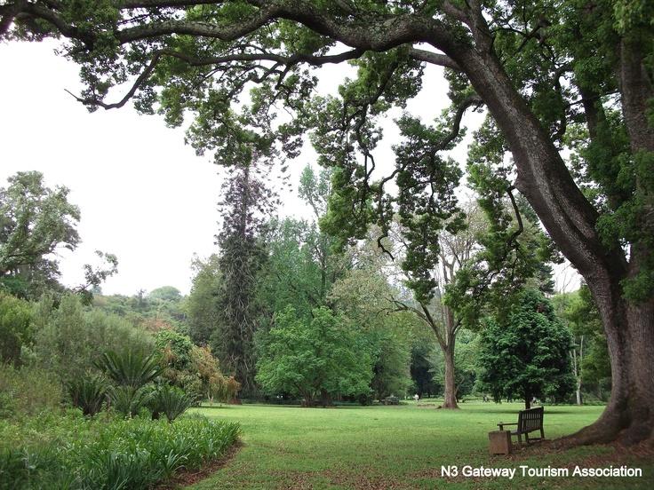 Pietermaritzburg's Botanical Gardens By Rosemary Hall http://www.n3gateway.com/the-n3-gateway-route/pietermaritzburg-tourism.htm
