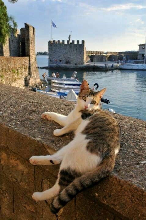 Relaxing in Nafpaktos. Lots of kitties in Greece. Not so many in France, but plenty of dogs.