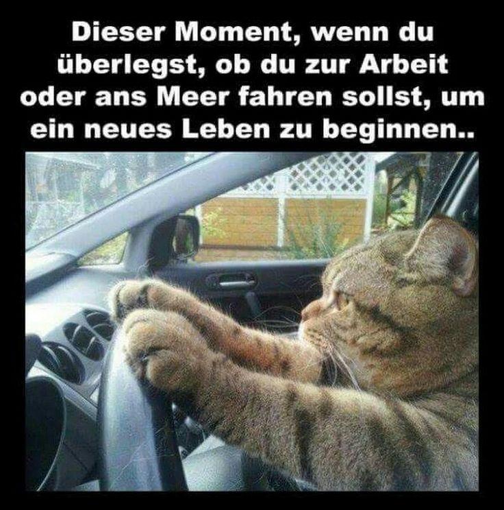 Best 482 lustige Tiere images on Pinterest   Sprüche und