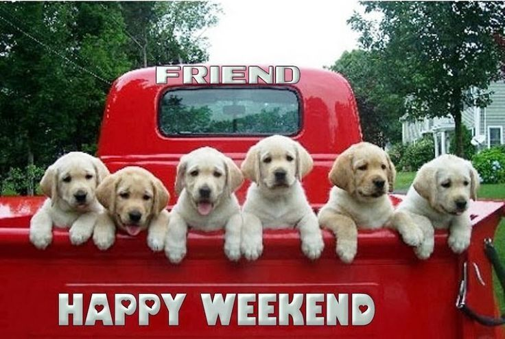 Happy Weekend- cut six puppies!
