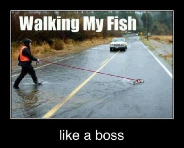 funny pictures with captions | fish walking funny caption picture share this funny caption pic on ...