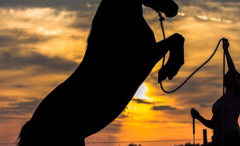 Steigendes Pferd im Sonnenuntergang Pferdefotografie Petra Tänzer
