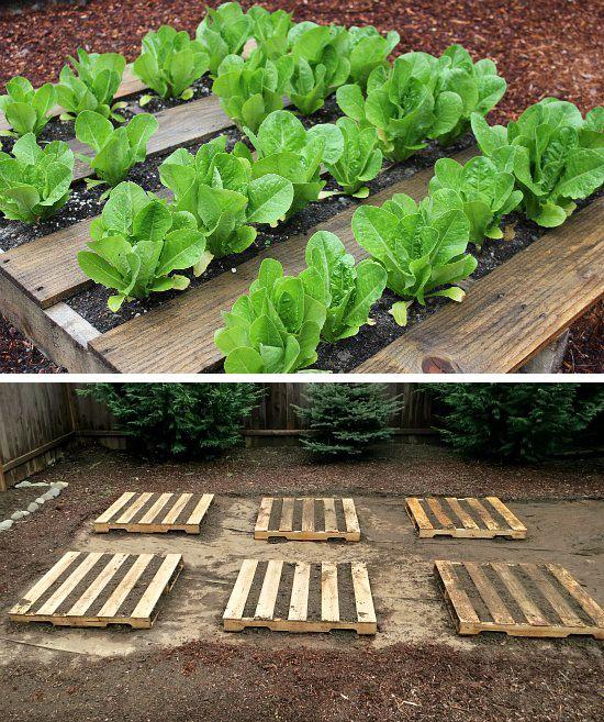 Cómo reutilizar palés para pequeños cultivos
