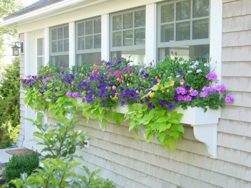 Beautiful flower boxes!: Gardens Ideas, Kitchens Window, Sweet Potatoes Vines, Boxes Design, Color Combinations, Traditional Landscape, House, Flower Boxes, Window Boxes
