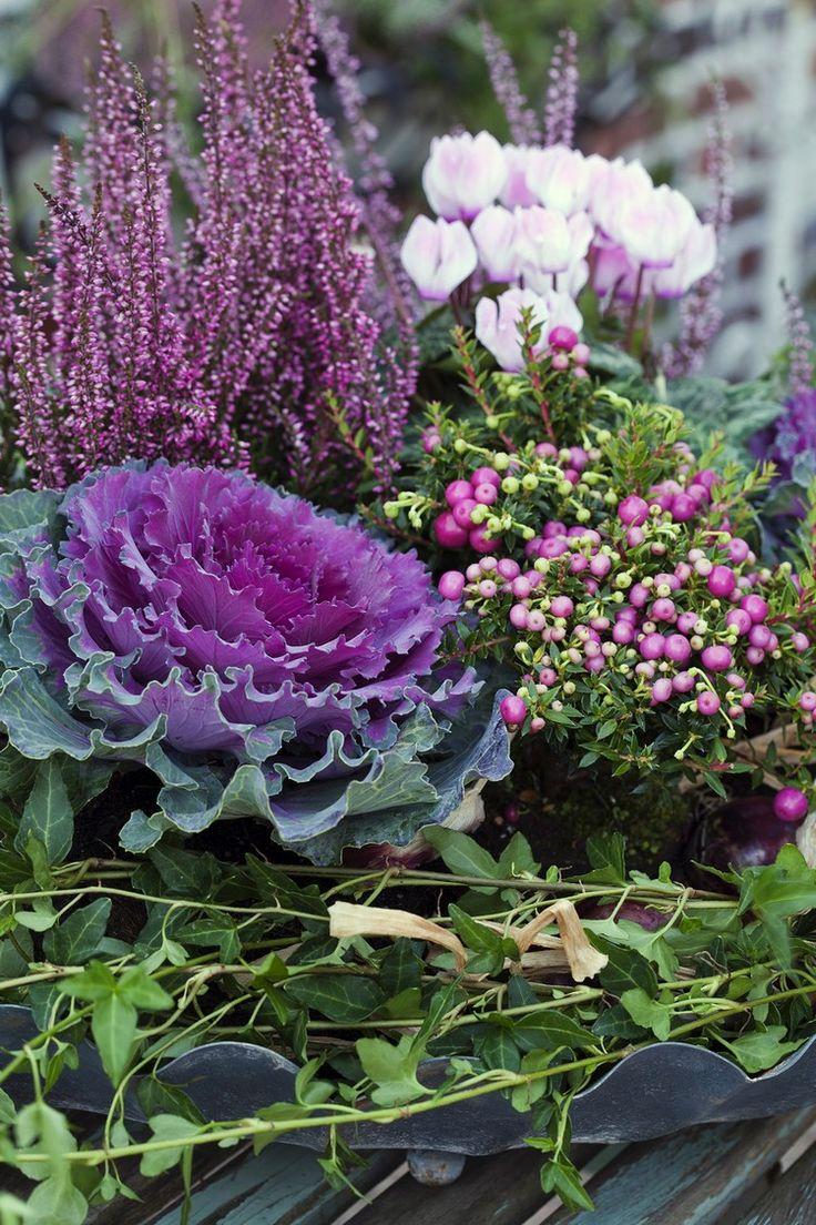 déco d'automne originale - arrangement de chou, baies, bruyère erica et cyclamen