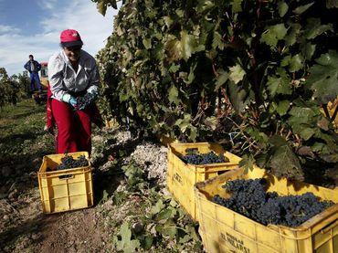 Chile abre primer centro investigador del vino en Latinoamérica :: El Informador