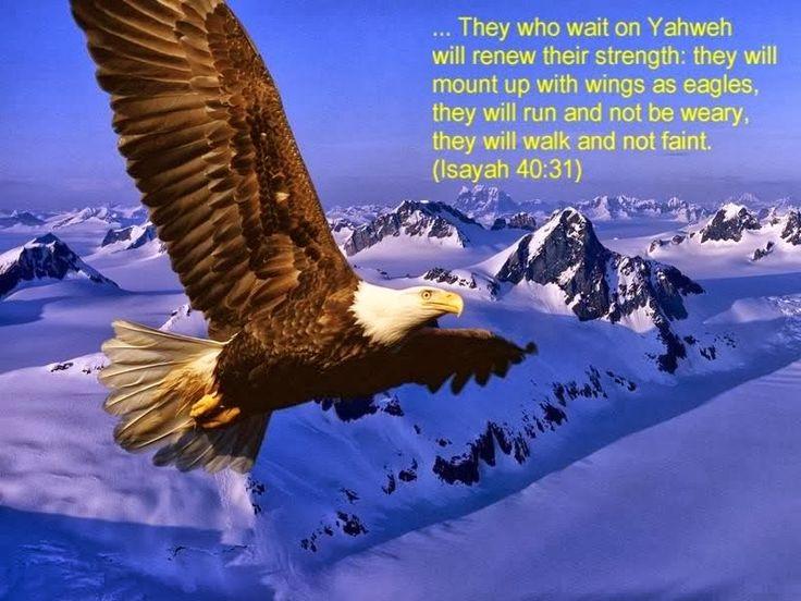 """BEPROEVING:  VOLHOUDEN - """"maar zij die hopen op de Heer, vernieuwen hun kracht   en slaan hun vleugels uit als adelaars;   zij lopen en worden niet moe,   zij rennen en raken niet uitgeput.""""(Jesaja 40:31)"""
