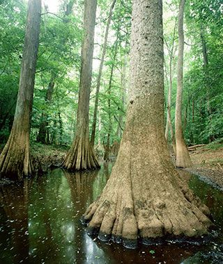 America's Best Secret National Parks: Congaree National Park