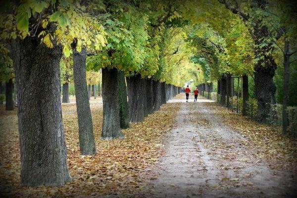 Vienna's Schönbrunn Gardens